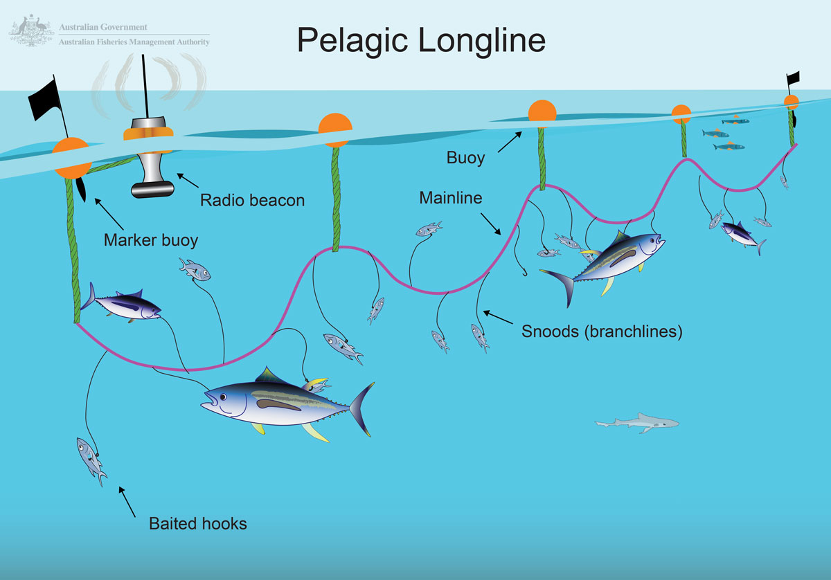 Pelagic longline diagram